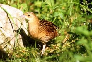 Įdomūs faktai apie paukščių mitybą: kai kam užtenka vos vienų pietų