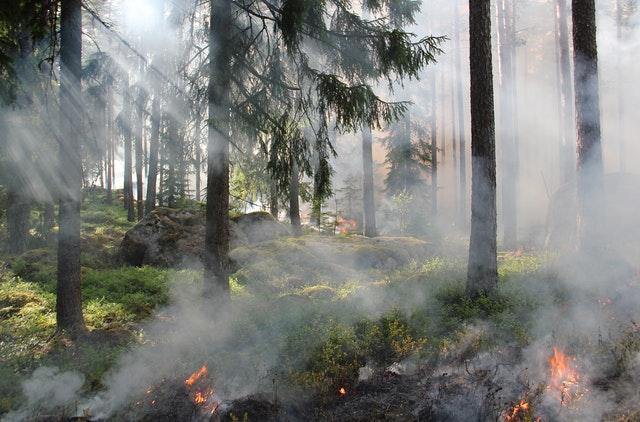 Miškininkai įspėja: prasideda miško gaisrų sezonas