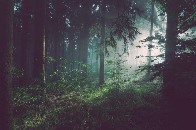 Lietuvos miškų ateitis